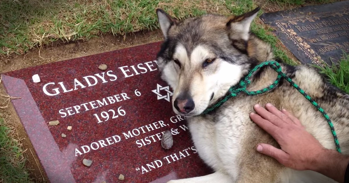 Dog laying on grave of owner